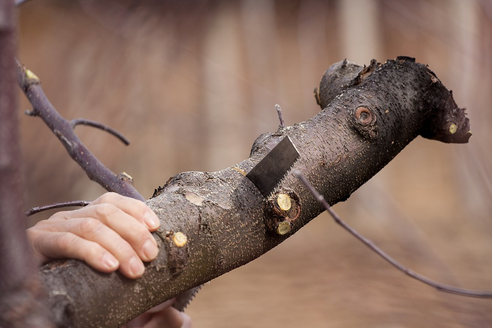 tree services plymouth mn