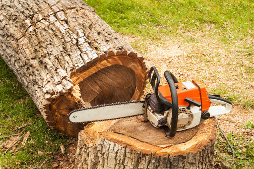 tree removal Plymouth MN