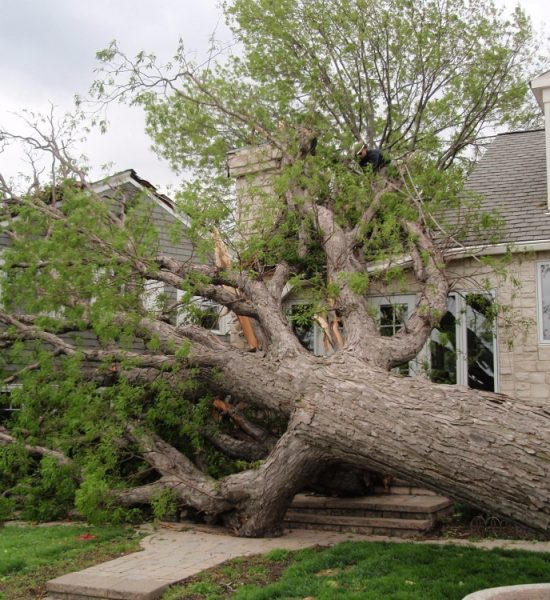 emergency tree service Plymouth MN